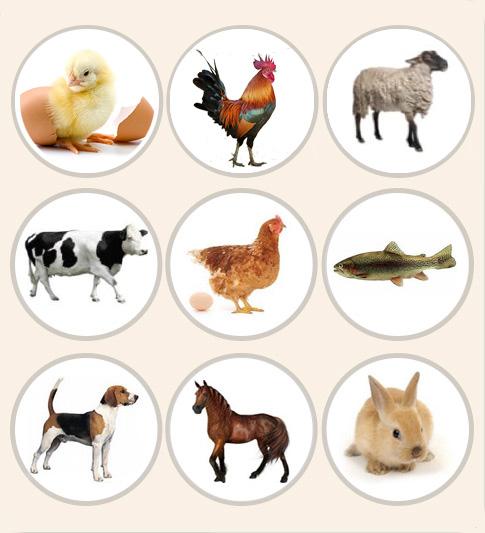 Les espèces animales