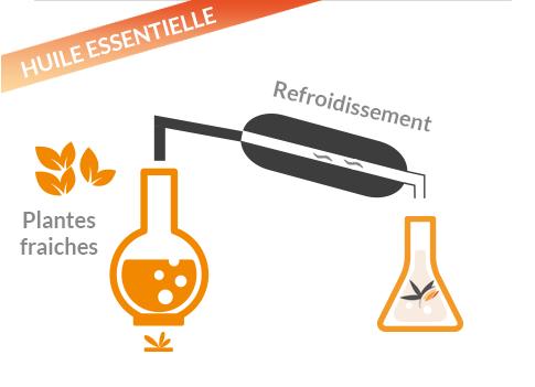 Extraction des composants actifs naturels par distillation