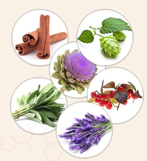 Phytomize est le partenaire pour produire des formulations botaniques pour les acteurs clefs de la nutrition et la santé animale.