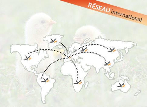 Un réseau international de distribution