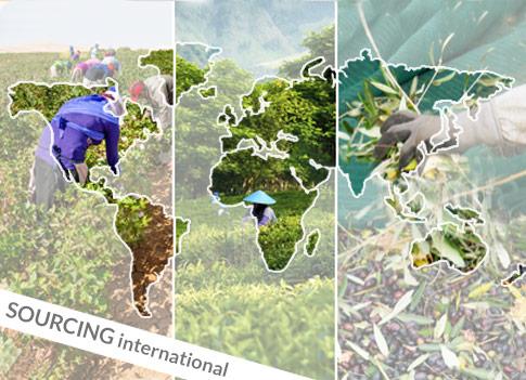Partenariats intercontinentaux pour un sourcing durable
