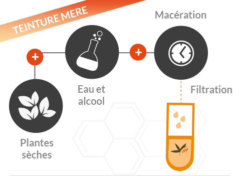Extraction des composants actifs naturels par macération