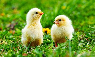Notre vision de l'industrie animale